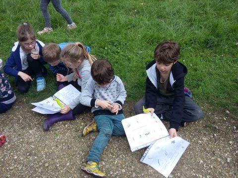 Etude des insectes - Classe découverte Nature