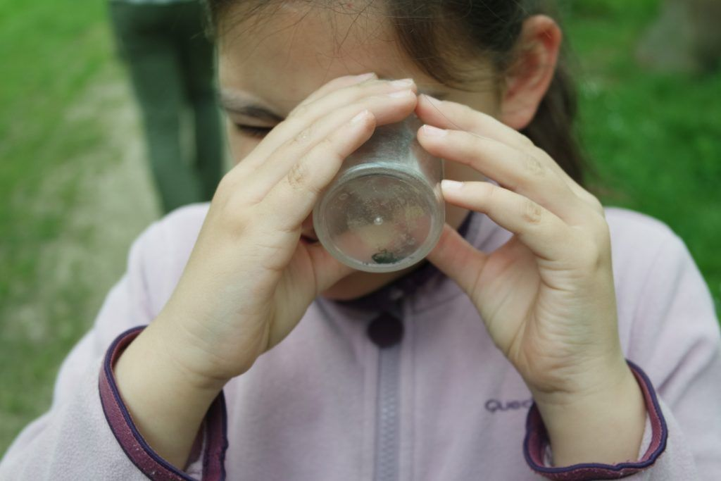 Observation des insectes - Classe découverte Nature